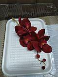Гілка орхідеї малої з бутонами L 250, фото 7