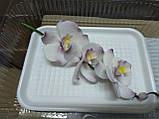 Гілка орхідеї малої з бутонами L 250, фото 5