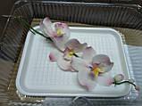 Гілка орхідеї малої з бутонами L 250, фото 6