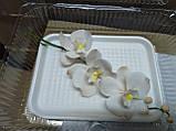 Гілка орхідеї малої з бутонами L 250, фото 8