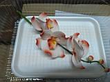 Гілка орхідеї малої з бутонами L 250, фото 9