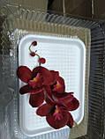 Гілка орхідеї малої з бутонами L 250, фото 10