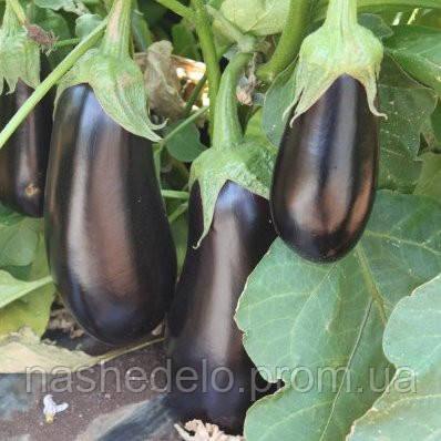 Семена баклажана Мадалена F1 250 семян Vilmorin