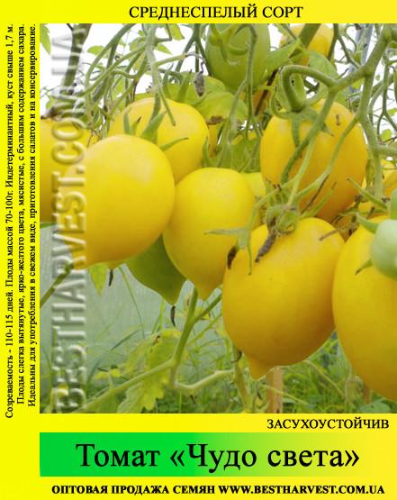 Семена томата «Чудо света» 50 г