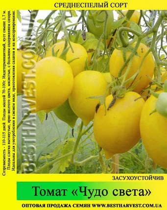 Семена томата «Чудо света» 50 г, фото 2