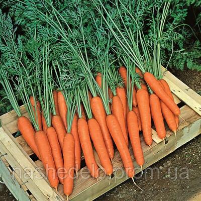 Семена моркови Престо F1 25 000 семян Vilmorin