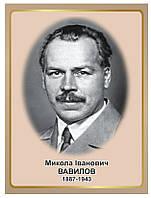 Стенд Портрет біолога Миколи Івановича Вавілова