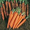 Семена моркови Сопрано F1 100 000 (VD) семян Vilmorin