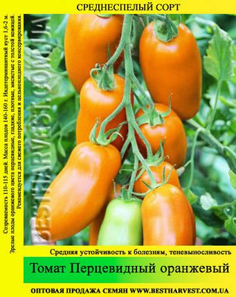 Насіння томату «Перцевідние» помаранчевий 50 г, фото 2