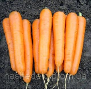 Семена моркови Аттило F1 100 000 семян Vilmorin