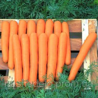 Семена моркови Маэстро F1 100 000 (VD) семян Vilmorin