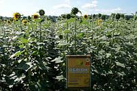 Семена подсолнечника Обрион, фото 1