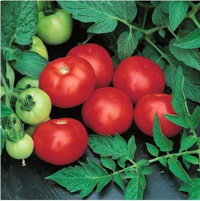 Семена томата Топкапи F1 (1000 сем.) Vilmorin