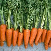 Семена моркови Ред Коред 500 000 семян Vilmorin
