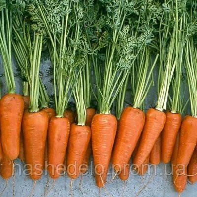 Шантане 0,5 кг морква Нікерсон (Вильморин)