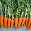 Семена моркови Ред Коред 0,5 кг. Vilmorin