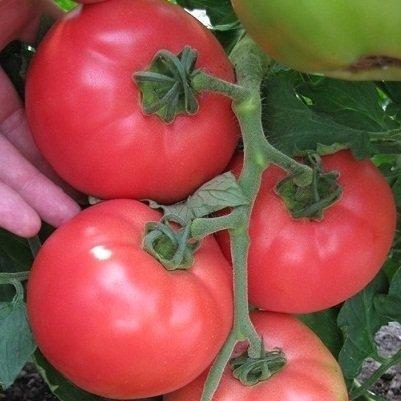 Семена томата VP-1 F1 (250 сем.)