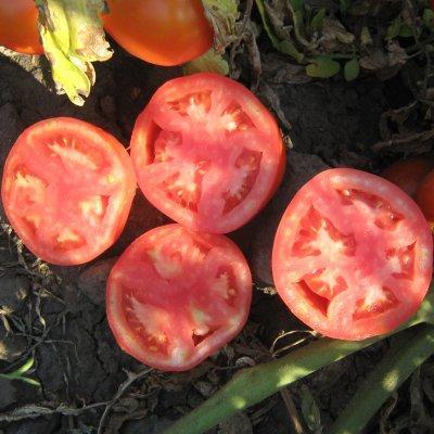 Семена томата Трибека F1 (1000 сем.)