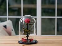 Роза в стеклянной колбе Алый рубин. Доставка по Украине бесплатно.