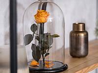 Роза в стеклянной колбе Огненный янтарь
