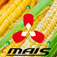 Кукуруза Марсер