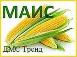 Семена Кукурузы ДМС ТРЕНД (ФАО - 290)(дополнит. инсекто. протрав.) 2020 г.у. (МАИС Днепро), фото 2