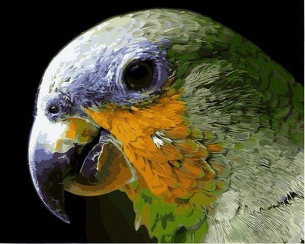 Набор для рисования 40×50 см. Попугай
