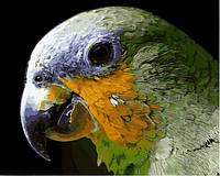 Набор для рисования 40×50 см. Попугай, фото 1