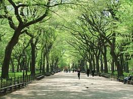 Зеленые насаждения в городах