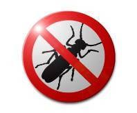 Уничтожение насекомых и грызунов, дезинсекция, Крым, Симферополь, Севастополь