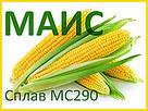 КУКУРУЗА СПЛАВ МС 290 (ФАО - 290) 2020 г.у. (МАИС Синельниково), фото 2