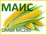 КУКУРУДЗА СПЛАВ МС 290 (ФАО - 290) фр.2 2020 р. в. (МАЇС Синельникове), фото 2