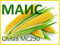 Семена кукурузы Сплав МС 290 (ФАО - 290) 2019 г.у. (МАИС)