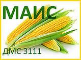 Семена Кукурузы ДМС 3111 (ФАО - 310) (МАИС Синельн), фото 2
