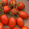Семена томатов дет. для переработки и свежего рынка ДИНО F1, (1000 сем.), Clause, Франция
