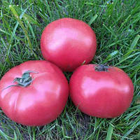 Розовый томат индетерминантный ПИНК КРИСТАЛ F1 ,(250 сем.), Clause, Франция