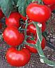 Семена томата индетерминантного ЧИМГАН F1, (250с.), Clause, Франция