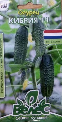 Семена огурца Кибрия 10шт Велес, фото 2