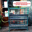 """Клетка для кур несушек и бройлеров """"ИНКИ КР-24"""" (разборная), фото 2"""