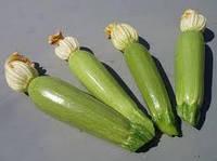 Семена кабачка АЛИЯ F1, (500 сем.), Clause, Франция