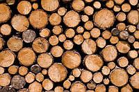 Сухие дубовые дрова
