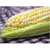Кукуруза сахарная КАМБЕРЛЕНД F1 ,(50 000 сем.), Clause, Франция