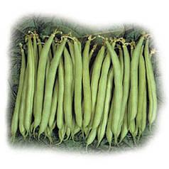 Серенгети F1 — ранняя спаржевая фасоль, 100 000  семян