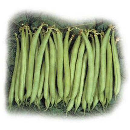 Серенгети F1 — ранняя спаржевая фасоль, 100 000  семян, фото 2