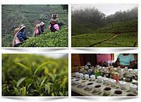 Туры на Шри Ланку. Интересные факты о стране