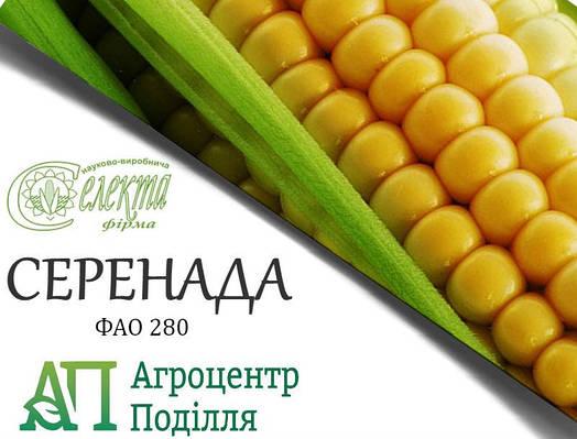 Семена кукурузы СЕРЕНАДА ФАО 280