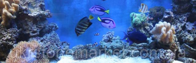 Сухой риф в аквариуме