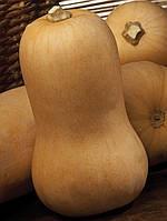Семена тыквы СИБЕЛЬ, (1000 сем.), Clause, Франция
