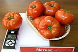 Матиас F1 500 шт. семена томата высокорослого Seminis Голландия, фото 3
