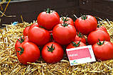 Матиас F1 500 шт. семена томата высокорослого Seminis Голландия, фото 4